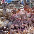 Coquillages au Sénégal (merci !!)