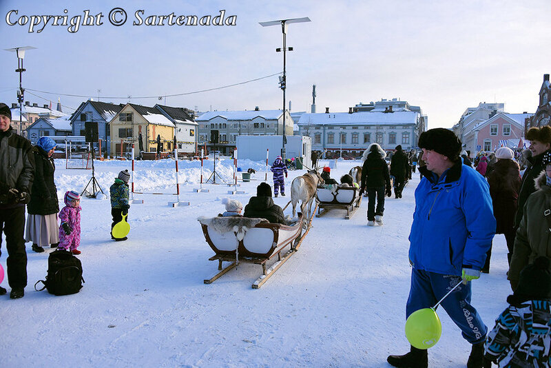 reindeer_rides_for_families_oulu_-6