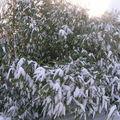 Neige dans mon village