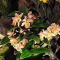 Orchidays