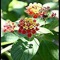 Fleurettes au soleil