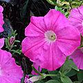 Mes photos Plantes, Fleurs...
