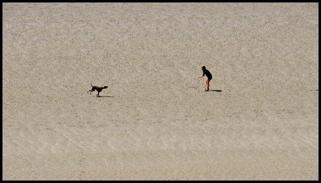 Un belle image de symbiose entre l'homme et son chien