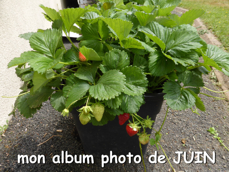 mon album photo de juin