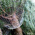 La fôret qui cache l'arbre (de noël)