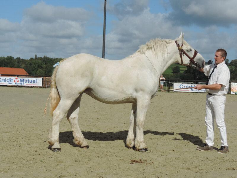 Idole de Colincthun - 5 Septembre 2020 - National Boulonnais - Samer (62) - 5e (2 ans - Grande Taille (1m64 et plus))