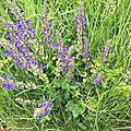 Ces fleurs attirent les insectes pollinisateurs...