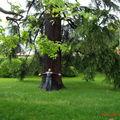 J1 Philo et l' arbre