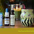 Choc et traumatisme : apaiser, restaurer, récupérer - vitalité / homéopathie / elixir floral européen : arnica