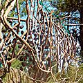 branches suspendues yurtao