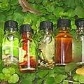 Les parfums magiques du maitre chaga