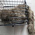 Ragoon dans sa cage !!