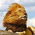 lion6925_1200494595_n