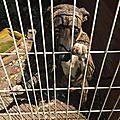 jeune chien encagé dans un poulailler