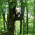 Découvre où se cache Jénorme dans la forêt de Bertiz (Espagne)