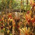 Jardin de balata (3)