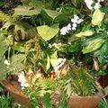 groupe de plantes