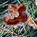 champignon-05923 (11)