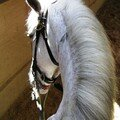 Mon royaume pour mon cheval et mon manège !