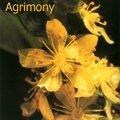 Préparer une séance de kinésiologie avec les fleurs de bach / elixirs floraux : agrimony et oignon