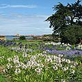 Île de Bréhat, fleurs (22)