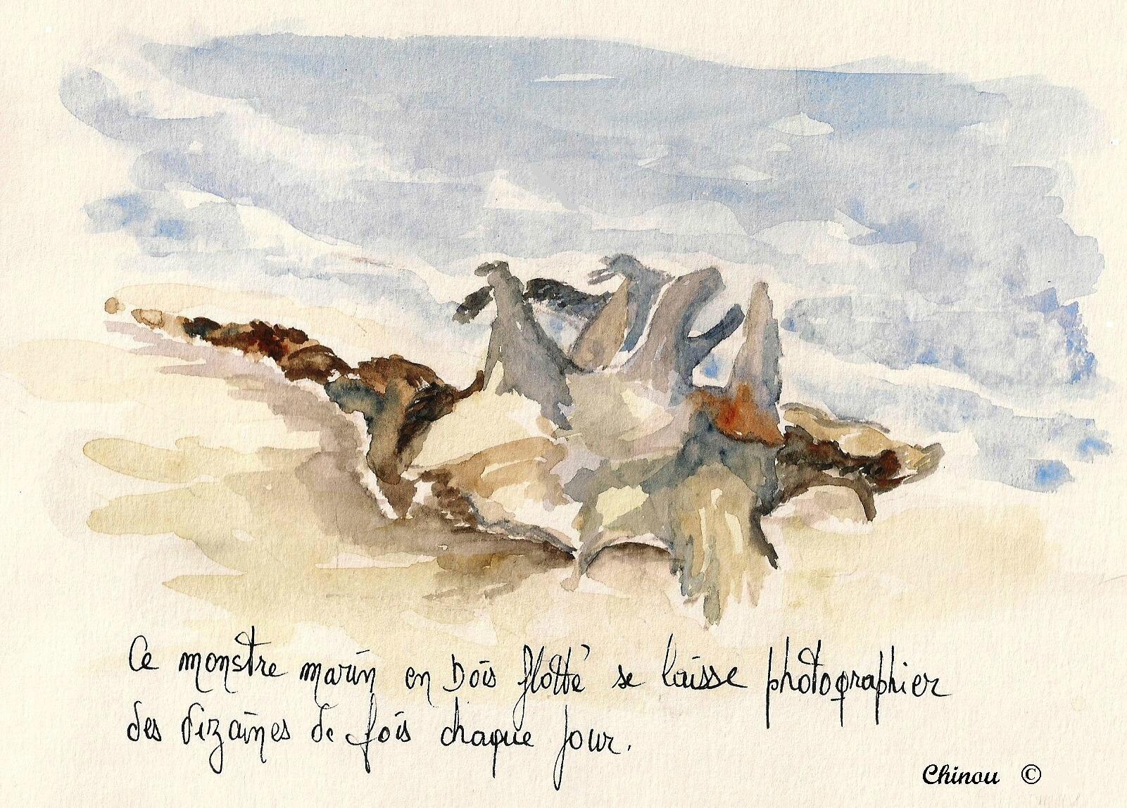 Echoué sur la plage de Palombaggia