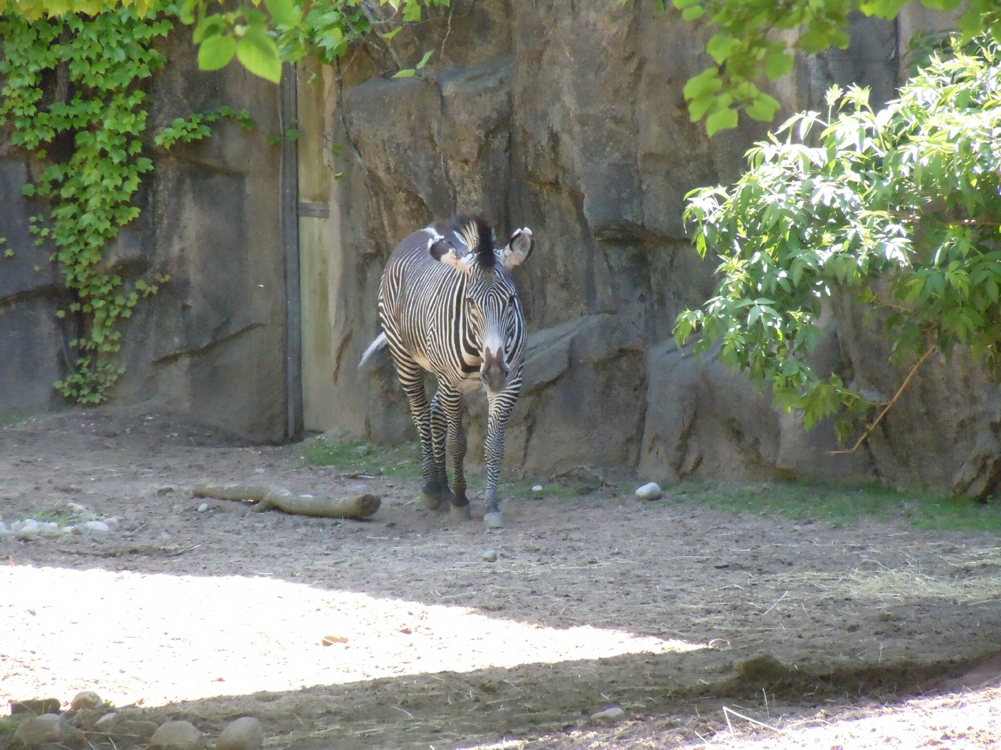 zoo + lincoln park (40)