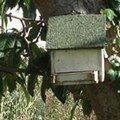 La cabane des oiseaux, dans le néflier