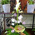 Composition mi hauteur Dendrobium, Arum, Cannelle