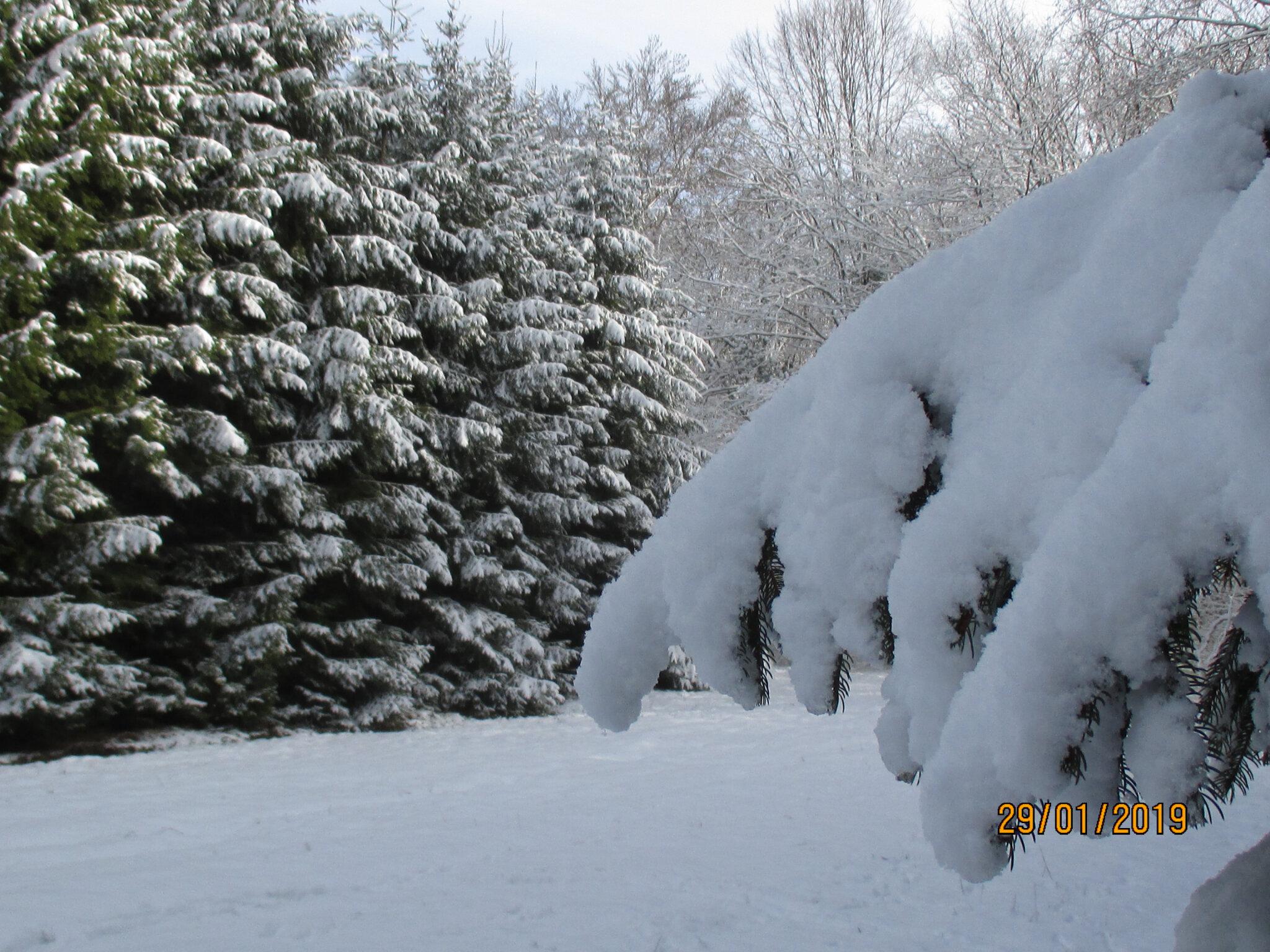 l'hiver me fait toujours rêver...j'aime le bruit de mes pas dans la neige