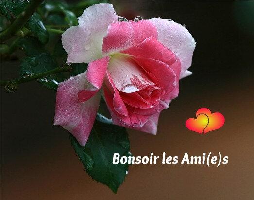 bonsoir BPat20