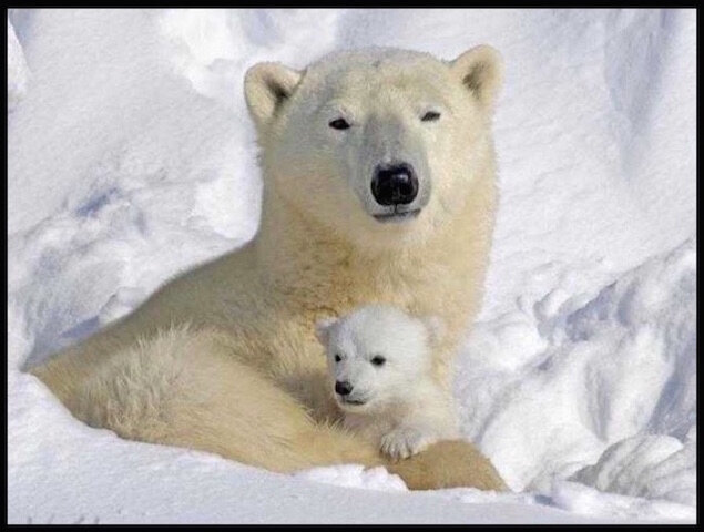 ours blanc tendresse 1