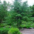 Jardin du haut-chitelet ( vosges )