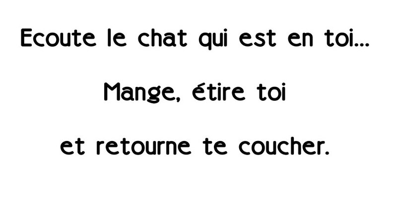 Ecoute le chat_n