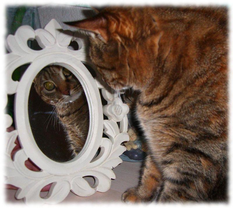 Mia et le miroir
