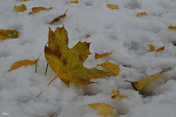 181120_neige_4