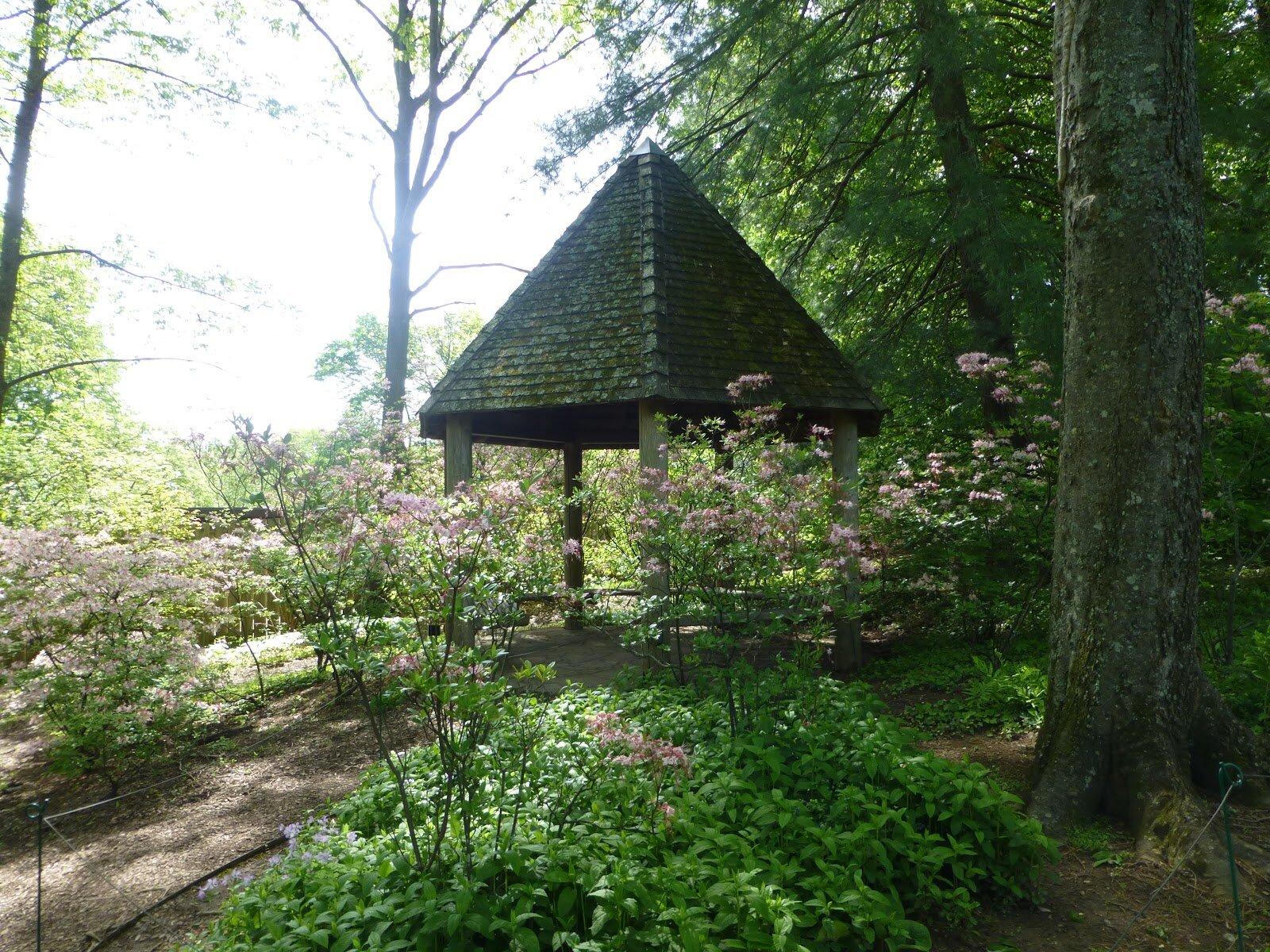 jardin botanique (400).JPG