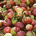 Compote de pommes ( des 4 mois )