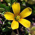 fleur sauvage minuscule
