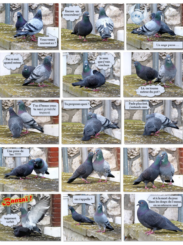 pigeons, love story