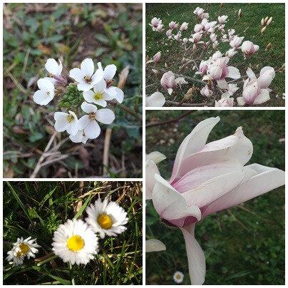 Printemps & fleurs (4)