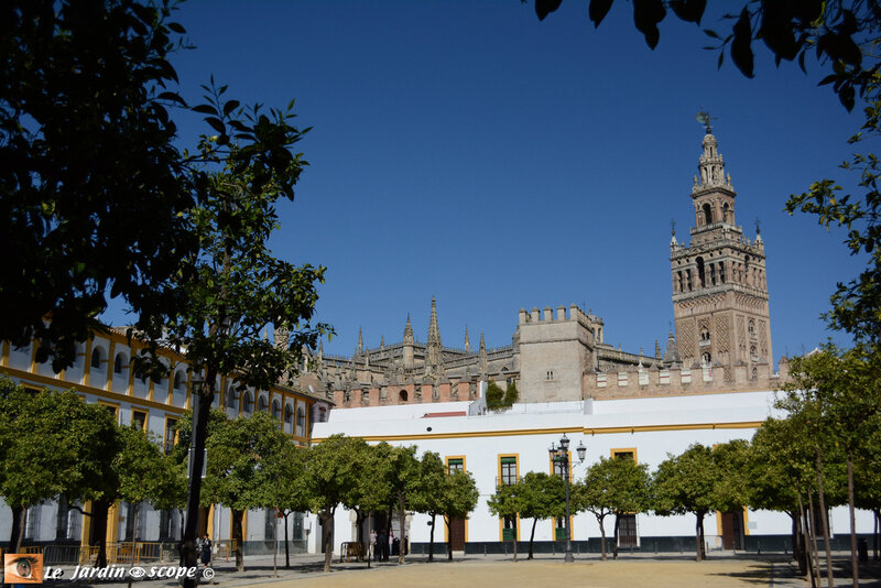 Cathedral-y-Giralda