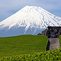 plantation-the-mont-fuji