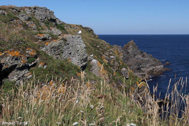 00737 Guidel - L'Ile de Groix - De la Pointe de Pen-Men au Sémaphore de Beg Melen