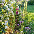Windows-Live-Writer/Jardin_10232/DSCN0773