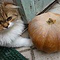 Bientôt son premier Halloween