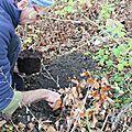Premier jardinage du premier janvier !