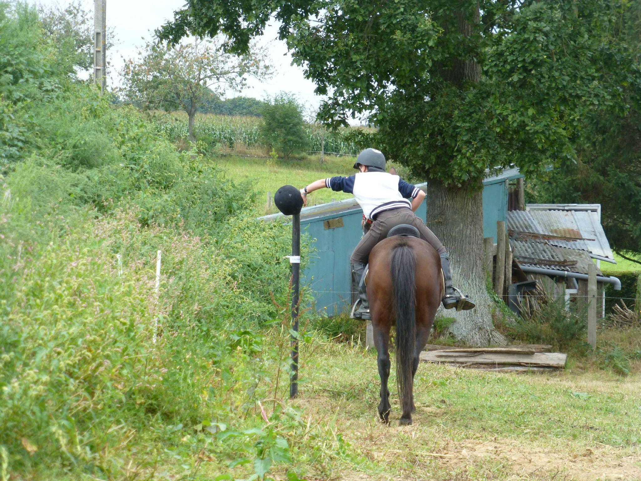Jeux équestres manchots - parcours de pleine nature après-midi (310)