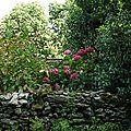 Jardin au Port Tudy