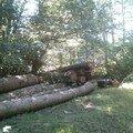 Entre La Salvetat et Fraïsse 09 09 2007